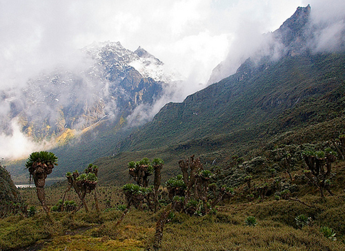 visit rwenzori mountains